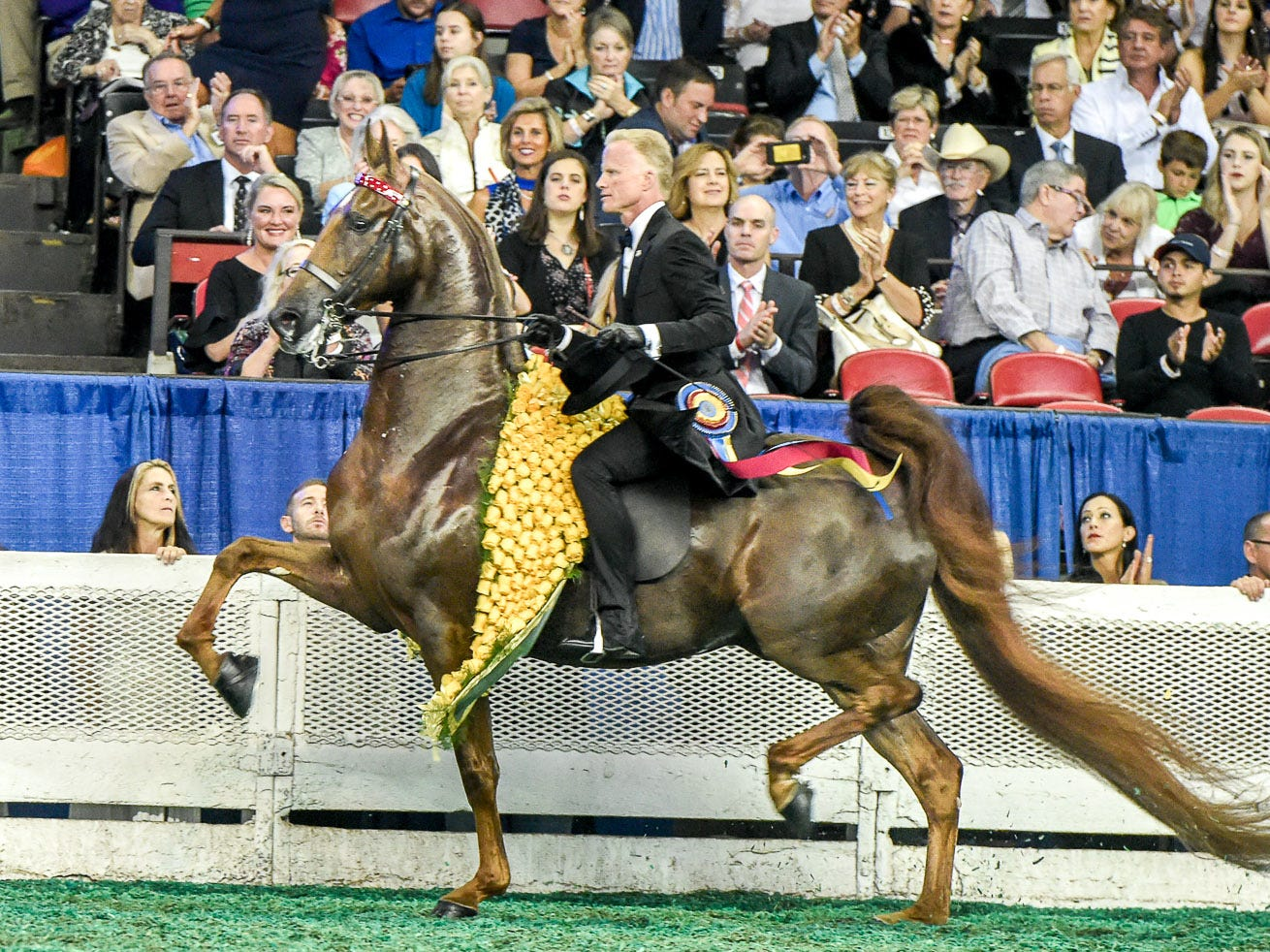 3 GAITED GRAND CHAMPIONSHIP winner Tango's Token Kiss (124817G) (WGC, WC, RWGC) 2012 Tango's Parting Kiss (111171S) X CF Deny Me Not (135288M)1 Owner: Grace Arnold LLC Rancho Santa Fe, CA Breeder: Harrison Shiflet and/or Beverly Shiflet Exhibitor: Smith LillyTrainer: Smith Lilly