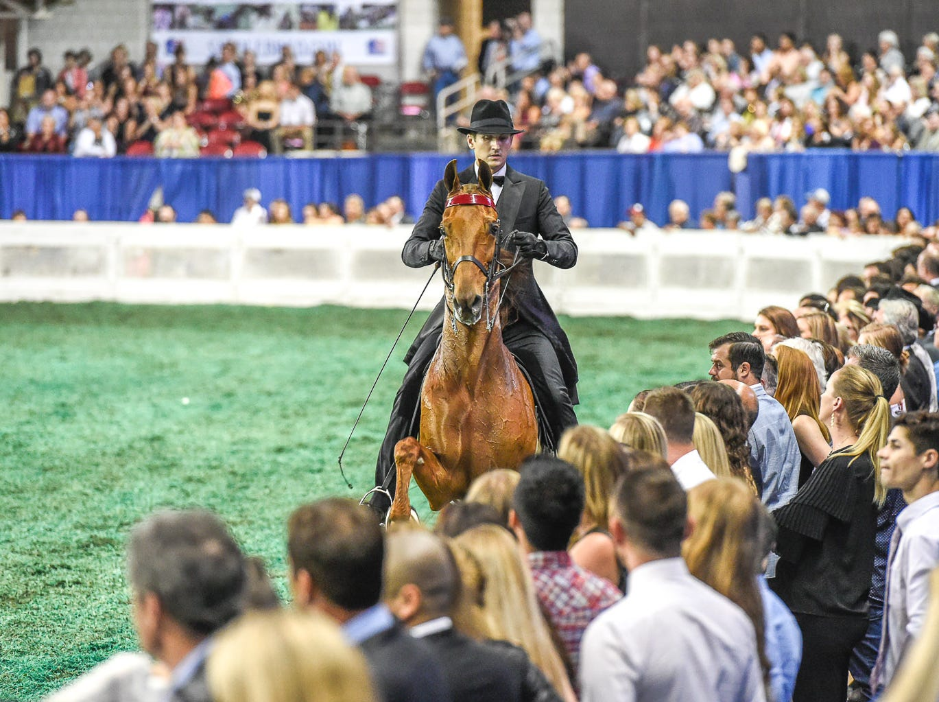 The Daily Lottery on his way to win the 5 gaited World's Grand Championship with trainer Daniel Lockhart