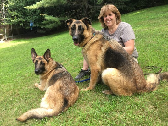 36cadd1795d2 German shepherds removed from Franklin Lakes house are almost ready for new  homes