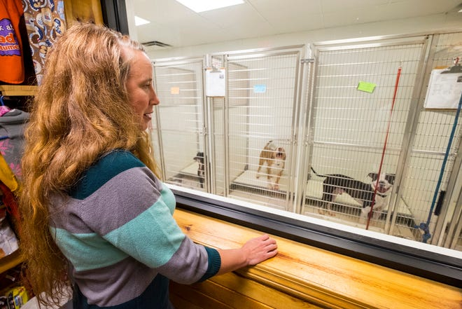St. Clair County Animal Control director Amy Warner looks through a window at several dogs available for adoption Monday, Aug. 27, 2018, at St. Clair County Animal Control.