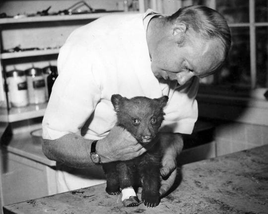 Smokey, a cub bear severely burned in a New Mexico forest fire, receives treatment from Dr. Edwin J. Smith of Santa Fe.