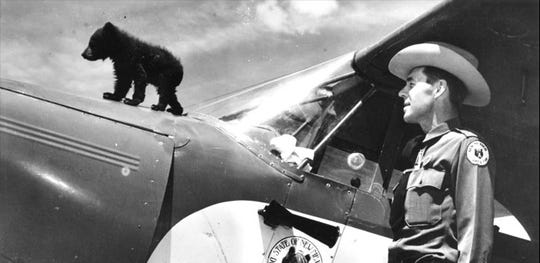 Nursed back to health under the watchful eye of Ray Bell, warden of the New Mexico Game and Fish Commission, Smokey stands on the plane that flew him from the Lincoln National Forest to Santa Fe for emergency treatment of his burns.