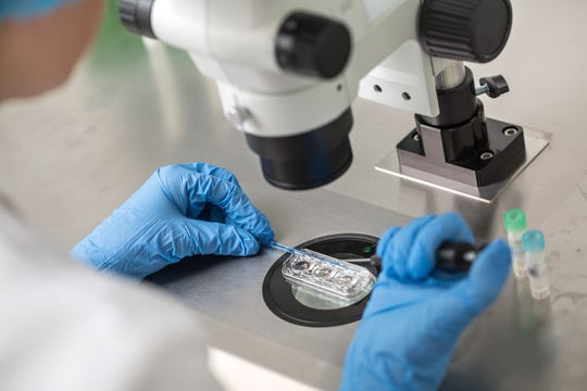 Doctor does control check of the in vitro fertilization process using a microscope.