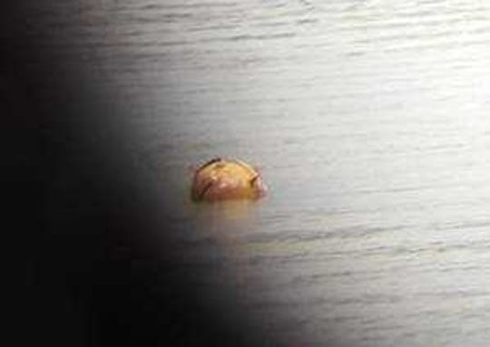 A reader photo taken with a smart phone and a telescope, shows the reported ordinance floating Tuesday off Brownsville.