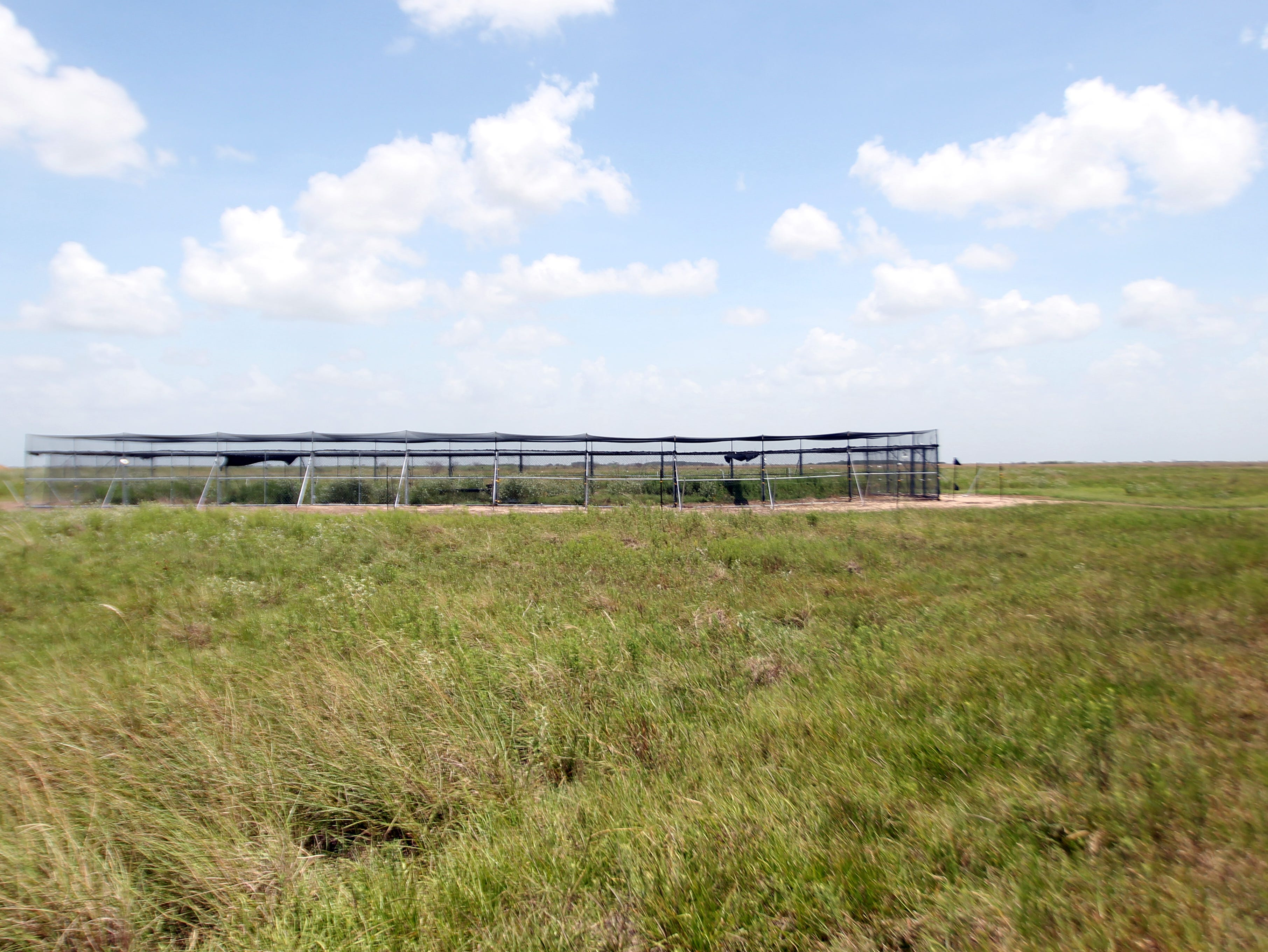 Three-month-old birds are held for two weeks within these large pens on the O'Connor property.