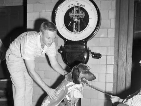 Smokey I gets weighed on the UT campus in 1953.