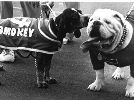Smokey V checks out University of Georgia mascot UGA before the 1980 football game against Georgia in Knoxville.