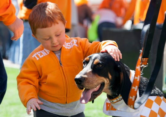Grey Skidmore, 2, from Knoxville pets Smokey X prior to the Orange and White game at Neyland Stadium Saturday, April 20, 2013.