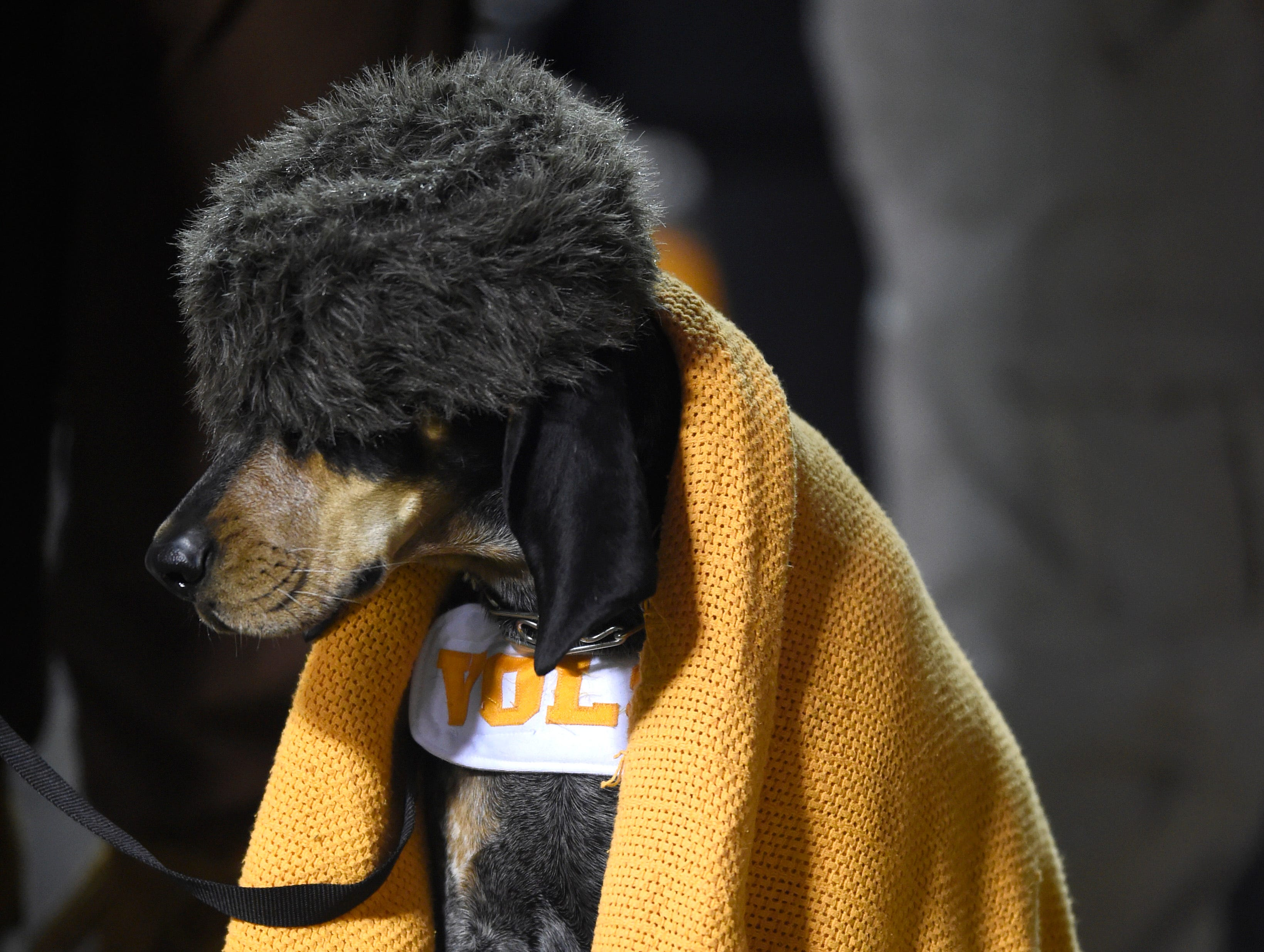 Smokey wears a coon skin hat as Tennessee plays Kentucky at Neyland Stadium in Knoxville, Tenn., Saturday, Nov. 15, 2014.