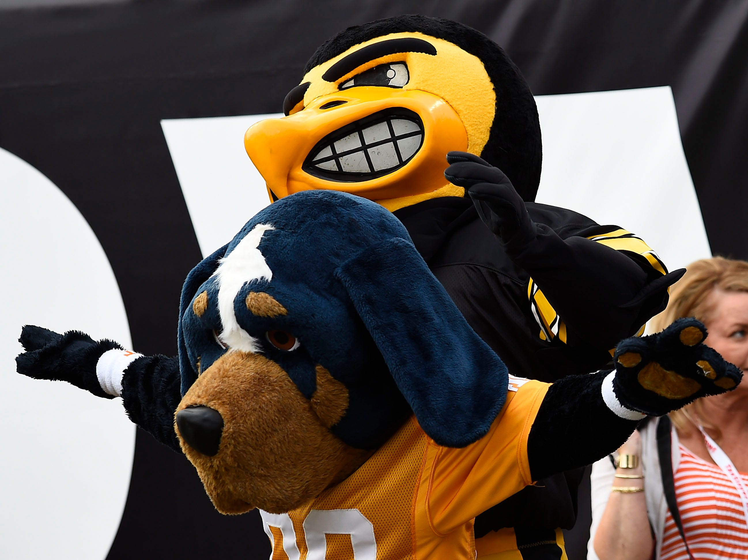 """Herky"" and ""Smokey"" pal around during the TaxSlayer Bowl Friday, Jan. 2, 2015."