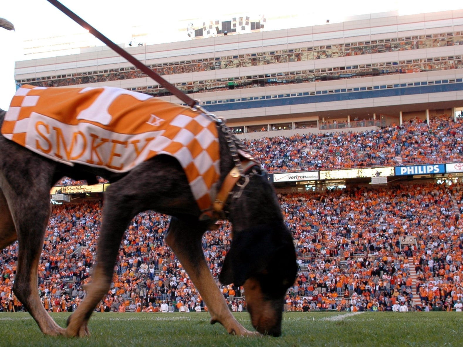 UT mascot Smokey IX, being the blue tick coonhound that he is, has his nose to the ground as walks along the sideline prior to leading the team through the T Saturday at Neyland Stadium. 11/06/2004