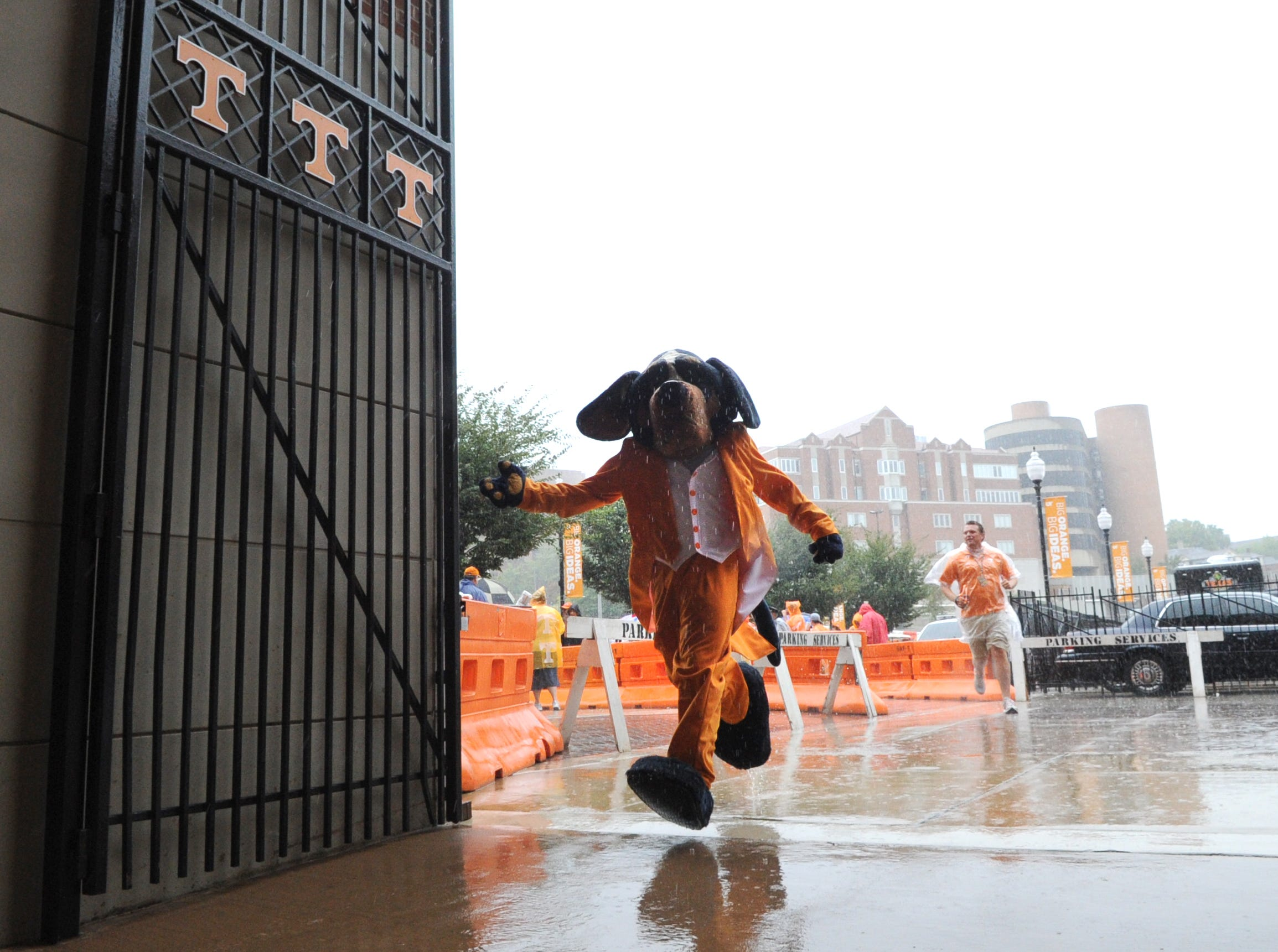Smokey runs into Neyland Stadium to escape heavy rain before the Tennessee Vols' matchup against the Georgia State Panthers Saturday, Sept. 8, 2012.