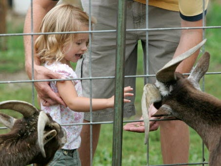 Madelyn Burris, 2, of Caledonia, gets a hand from her dad Jon while feeding goats at Apple Holler orchard in Sturtevant.