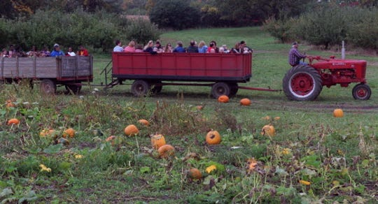 School groups and others get a hayride through the pumpkin patch at Apple Holler.