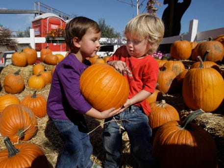 Cole Ketterhagen, 3, from Milwaukee (Bayview), looked high and low as he was determined to find the perfect pumpkin while on an outing with his mother at Apple Holler  Farms.