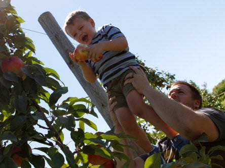 Matt Lesperance, of Waukesha, lifts his 3-year-old son, Luke, to pick apples during the annual Autumn Harvest Festival at Elegant Farmer.