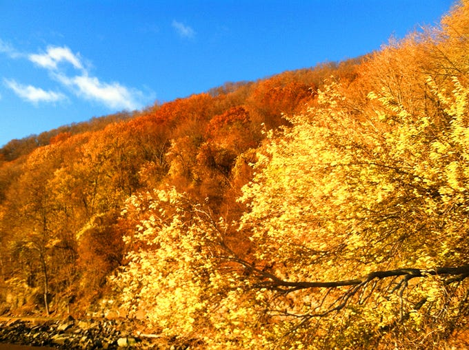 Yellow Leaves at Hook Mountain State Park in autumn