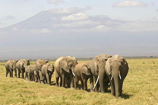 Kilimanjaro Express