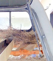 Roadrunner nest was built in stored camper hood.