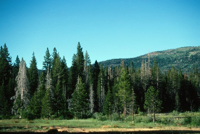Behind the overgrown fire-denied forest is a mountain top showing the natural mosaic of trees and open space.