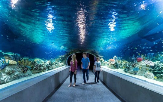 An underwater world unfolds at OdySea Aquarium in Scottsdale.