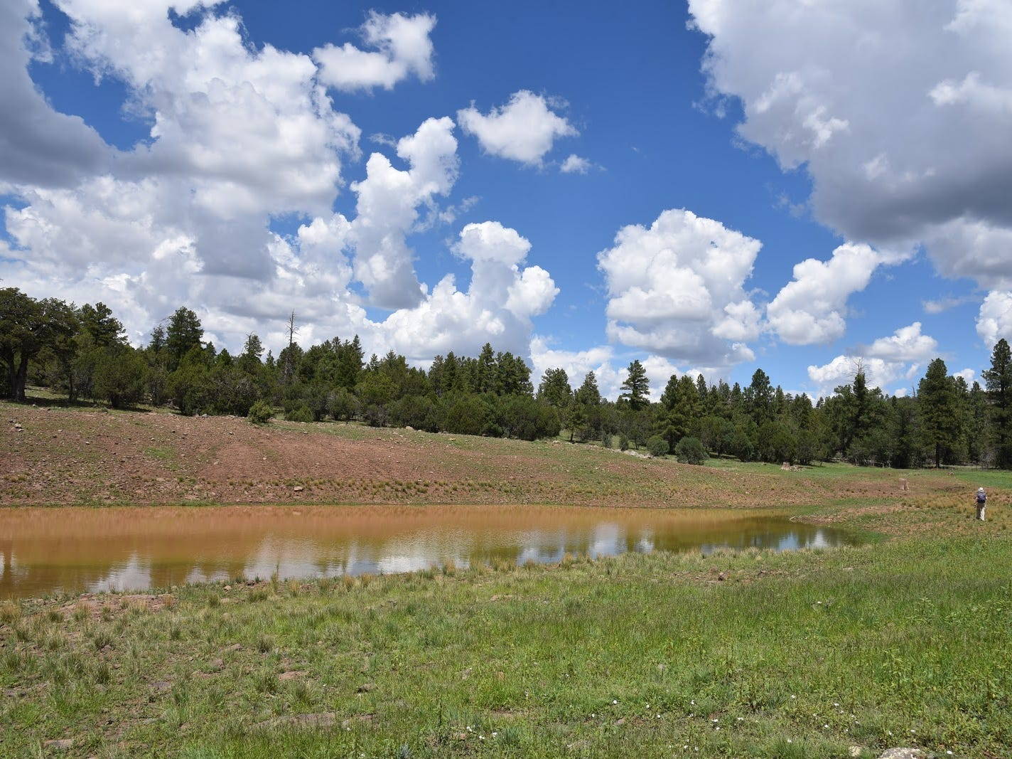 Sunny meadows surround Cow Tank.