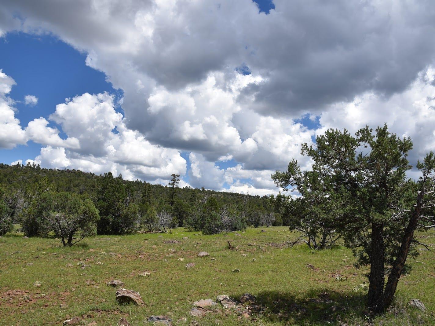 Monsoon clouds build above Wild Steer Mesa.