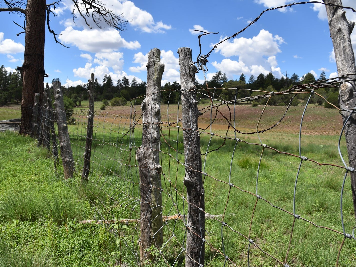 Barbed wire fences at Cow Tank.
