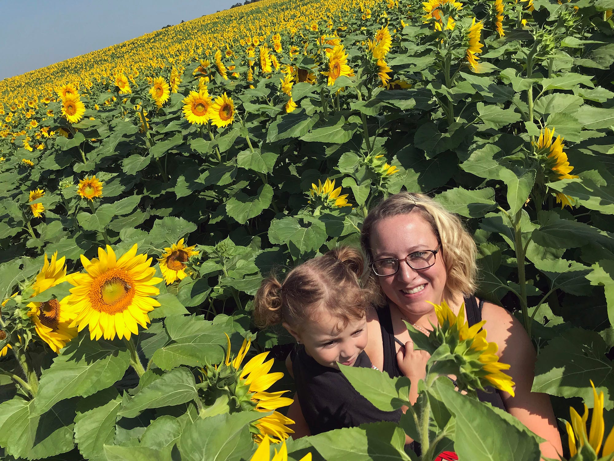 Three-year-old Kenley Welch and her mom, Kristen, check out sunflowers on Tuesday, August 28, 2018.A sunflower field is in bloom south of Chambersburg in Antrim Township. For several years, Lesher Poultry Farm has planted the sunflowers for visitors to enjoy. This year's location is at Marion Road (near Talhelm Rd.), off Interstate 81, Exit 10.