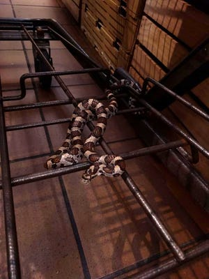 Much to her surprise, Laura Walitsky of Pittsford discovered that a snake had hitched a ride on her shopping cart at the Pittsford Wegmans Monday night.