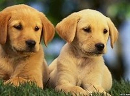 0905 Ynir Ask Dog Tr Double Trouble