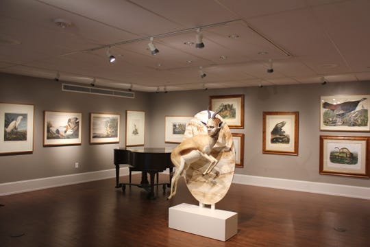 The Biggs Museum is showing 50  John James Audubon prints in  'Audubon Then and Now.'