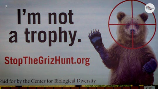 """""""I'm not a trophy"""" sign against bear hunting"""