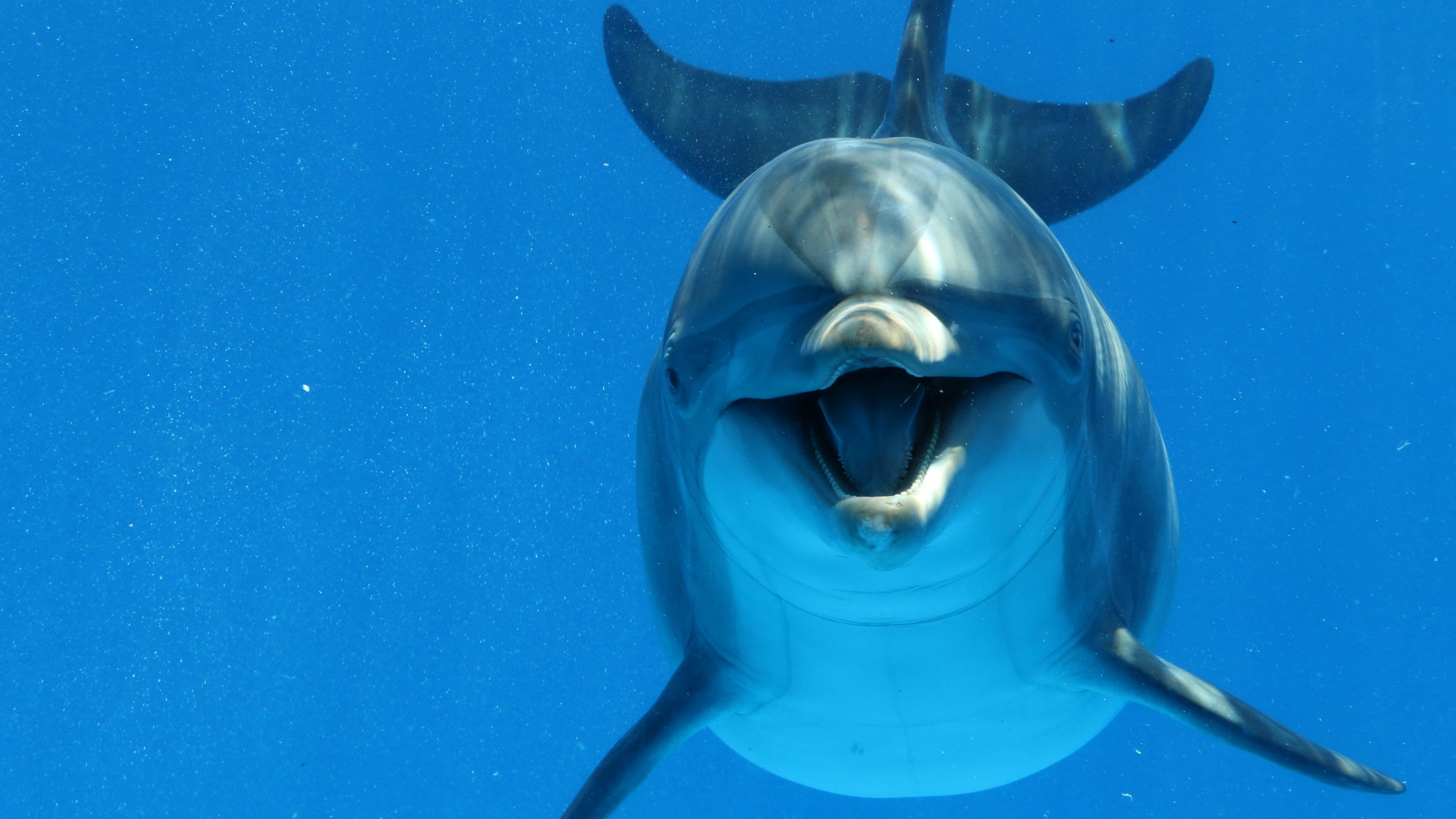Bottlenose Dolphin Reportedly Sparks Swimming Ban In France