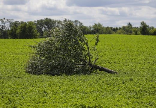 A tree lies in a field Wednesday, August 29, 2018, at W12072 Hemp Road near Waupun, Wisconsin. Heavy weather hit the Waupun area, causing major damage on Tuesday afternoons and affecting a potential tornado in some places. Doug Raflik / USA TODAY NETWORK Wisconsin