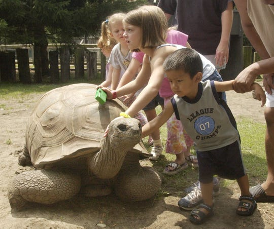 In this 2003 photo, Al the Aldabra giant tortoise stretches his neck out for soothing rubs from a bunch of kids.