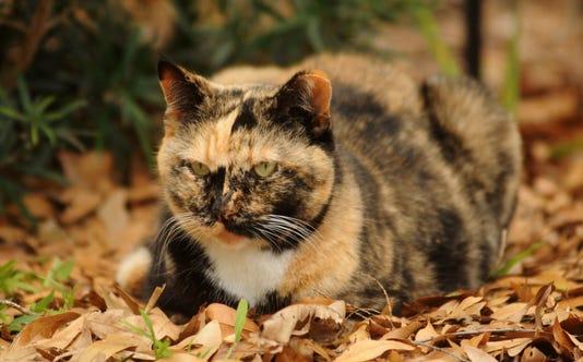 Wild Art Feral Cats