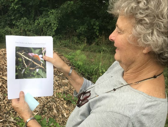 Margaret Skinner, a research entomologist at University of Vermont Extension, holds a life-sized photo of an adult giant swallowtail butterfly — the larvae of which she found feeding at the university's horticulture farm on Tuesday, Aug. 28, 2018.
