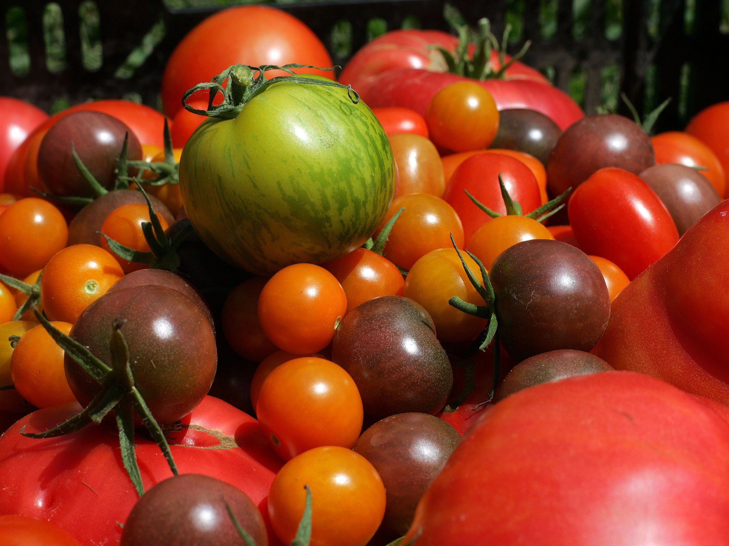 The love and frustrations of being a tomato grower: Your letters to the editor for Sept. 7