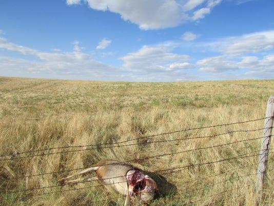 Aug 2018 Poached Mule Deer Buck