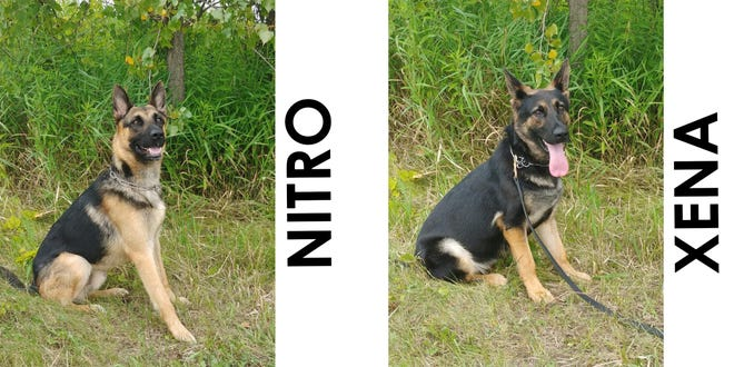 The House of Corrections in Franklin is adding two new K-9's— Nitro and Xena. The dogs were purchased with the assistance of the Wisconsin Veterinary Referral Center's K-9 Heroes Foundation.