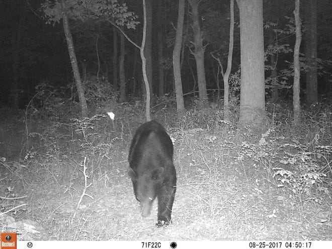 A black bear was spotted in August 2018 in Clarksville.
