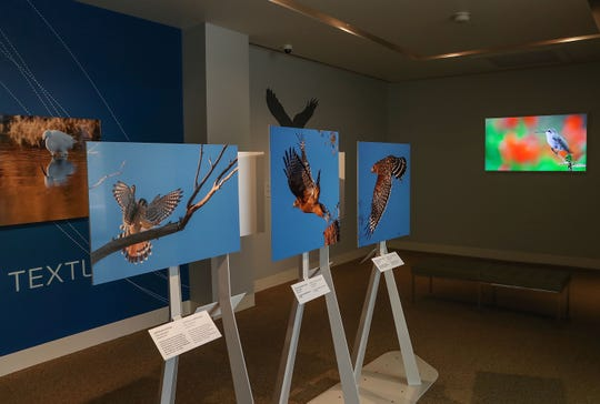 """""""Flight Plan: The Bird of Sunnylands"""" photography exhibit features the work of National Geographic photographer Tim Laman and brings to light Walter Annenberg's love for birds."""