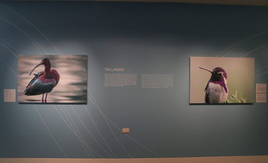 """""""Flight Plan:  The Bird of Sunnylands"""" photography exhibit features the work of National Geographic photographer Tim Laman.  The photos are of birds that reside at Sunnylands or that touch down along their migratory route."""