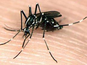 Invasive Asian mosquito found in Michigan