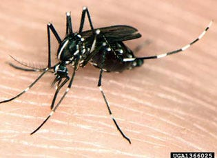 The Asian tiger mosquito has been confirmed in Michigan.