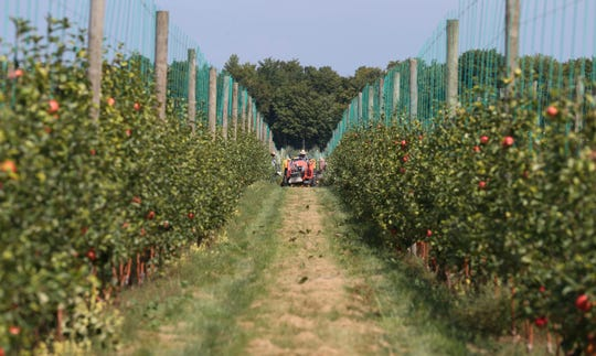 The Premier Honeycrisp apples grown and harvested at VanDeWalle Fruit Farm will be sold in local farm markets.