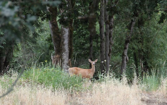 Deer at trail