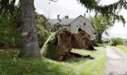 Uprooted trees line the front yard of a farm outside of village limites, Wednesday, August 29, 2018, in Cascade, Wis.