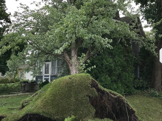 Uprooted trees in Cascade, WI on Wednesday, August 29 following heavy rainfall Tuesday evening to Wednesday morning.
